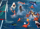 Shark water polo.PNG