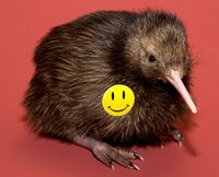 Kiwi with button 01.jpg
